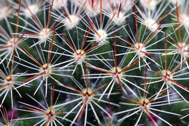 Closeup shot of a cactus with needles during daytime
