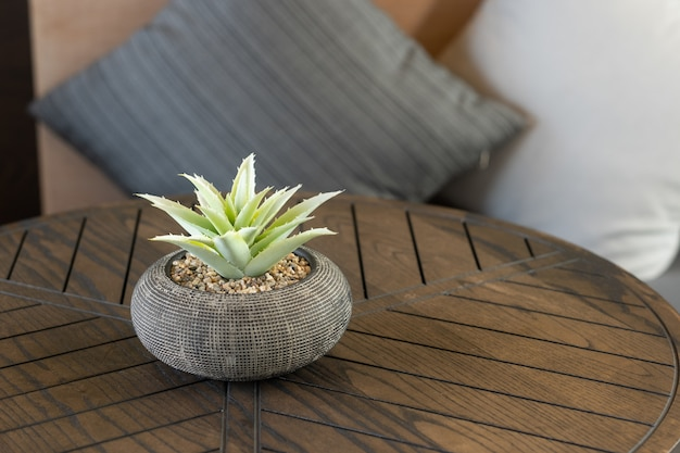 Closeup shot of a cactus on a wooden table with pillows