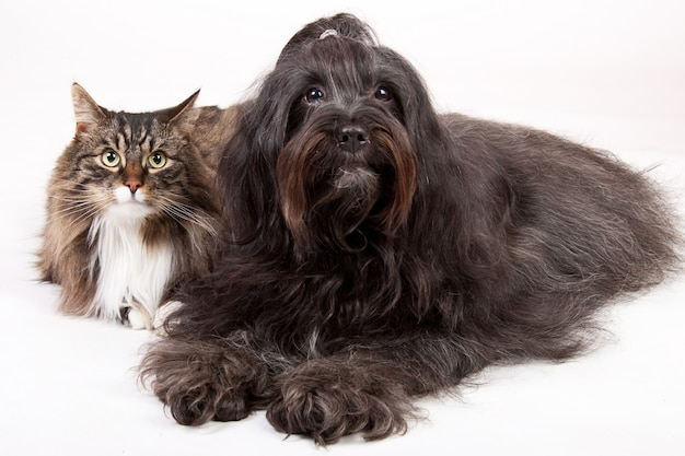 Closeup shot of a cat and a dog isolated on white