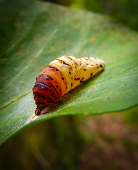 Closeup shot of colorful caterpillar on a leaf