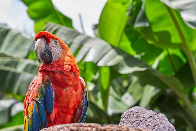 Colpo del primo piano di un pappagallo colorato con grandi foglie verdi sul