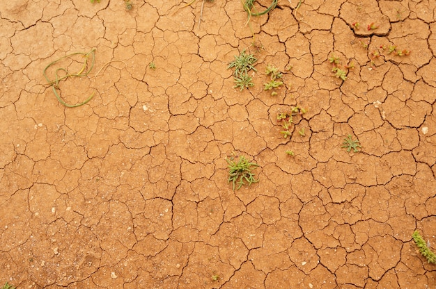 Closeup shot of a cracked ground surface