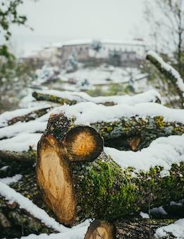Primo piano di un albero tagliato coperto di muschio e neve in una foresta