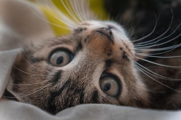 Primo piano di un simpatico gatto domestico con occhi ipnotizzanti