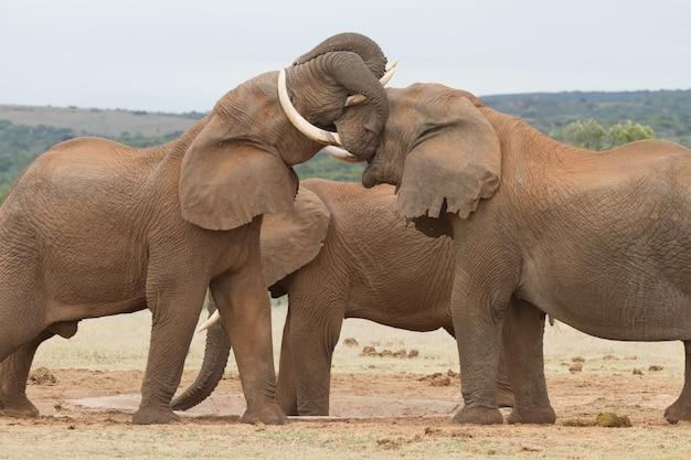 Closeup shot of cute elephants hugging each other