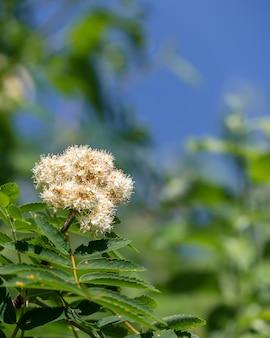 Colpo del primo piano di un fiore carino su uno sfondo sfocato
