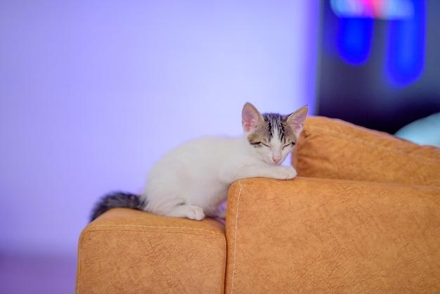 Closeup shot of a cute kitten lying on an orange sofa