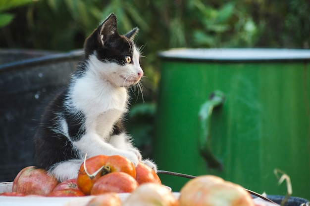 Closeup shot of a cute kitten playing in the yard with vegetables