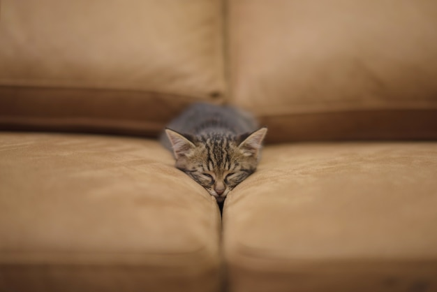 Closeup shot of a cute kitten sleeping between the pillows of a sofa
