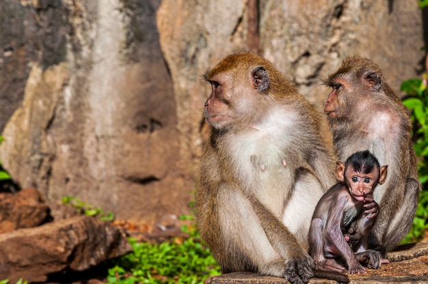 Closeup shot of a cute monkey family near rock formations in a jungle
