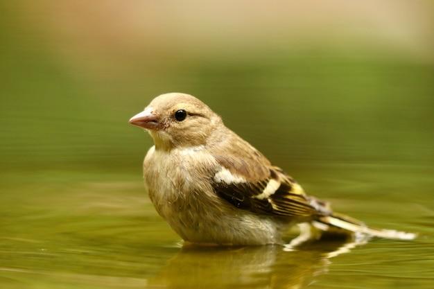 Colpo del primo piano di un simpatico passero uccello
