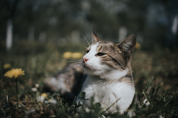Closeup shot of a cute white and brown cat lying in a field