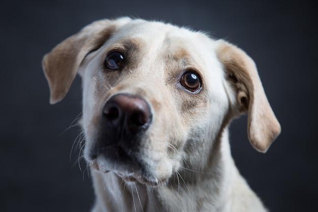 Il primo piano ha sparato di un cane da compagnia bianco sveglio con gli occhi gentili su oscurità