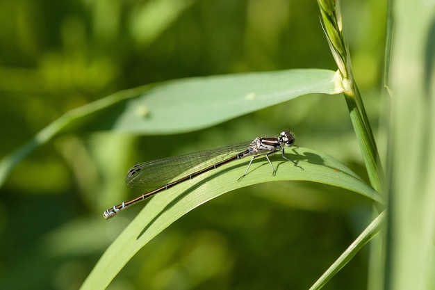 Closeup shot of a damselfly perched on a long leaf blade
