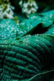 Colpo del primo piano delle goccioline di rugiada sulle foglie verdi