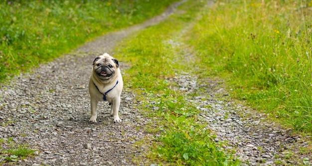 Closeup shot of a dog on an empty rock path