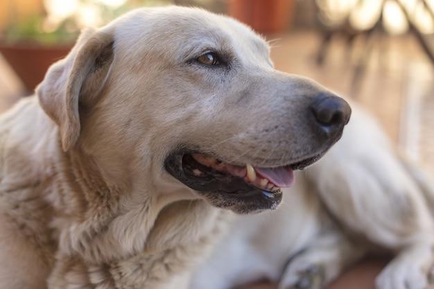 Colpo del primo piano di un cane con la bocca aperta