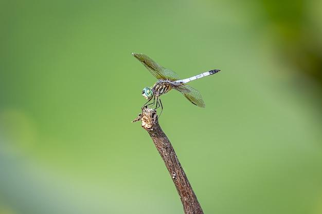 Il primo piano ha sparato a una libellula sotto la luce del sole