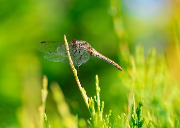 Closeup shot of a dragonfly under the sunlight