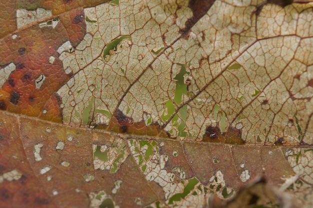 Closeup shot of a dry weathered leaf