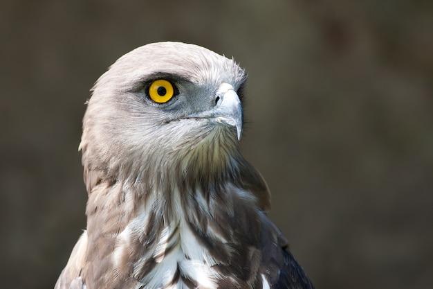 Closeup shot of an eagle's head