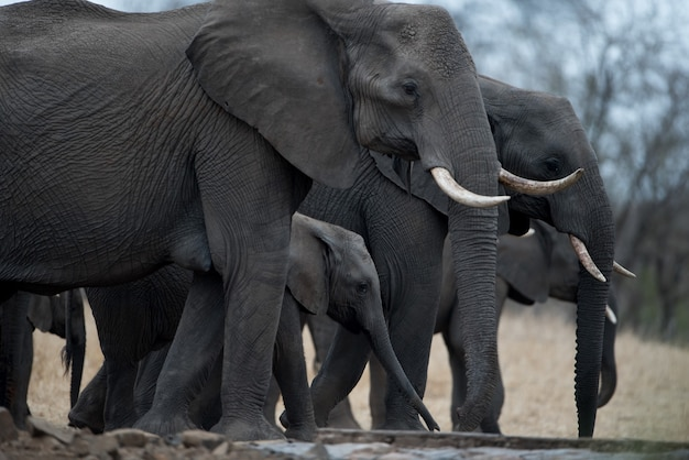 Closeup shot of an elephant herd