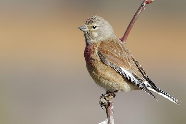 Colpo del primo piano di un uccello esotico che riposa sul piccolo ramo di un albero