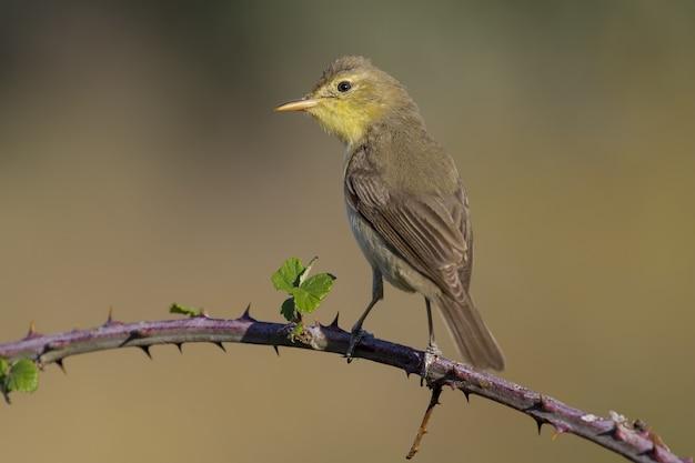 Primo piano di un uccello esotico che riposa sul piccolo ramo di un albero of