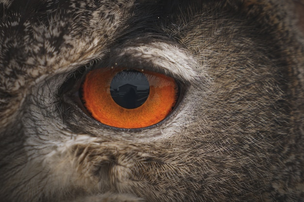 Closeup shot of the eye of a eurasian eagle owl in daytime