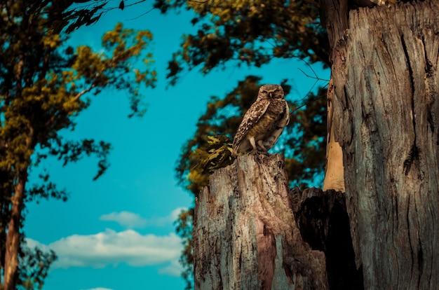 Colpo del primo piano del falco che si appollaia su una corteccia di legno con una superficie chiara del cielo