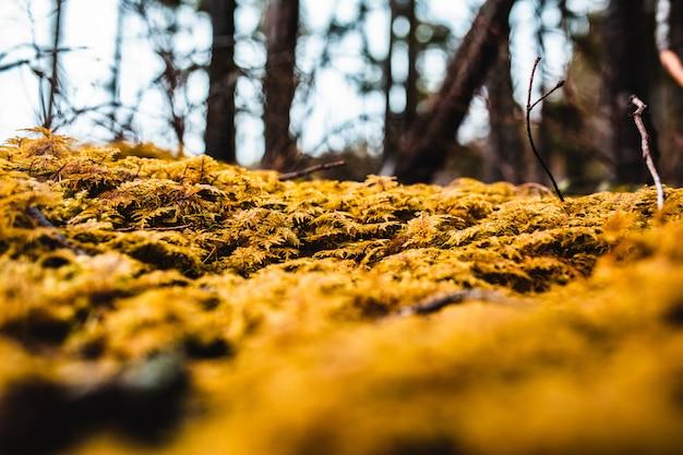 Colpo del primo piano delle foglie dorate cadute in una foresta