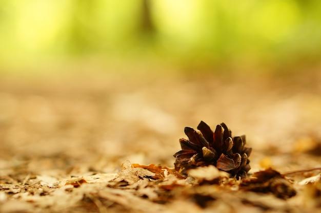 Closeup shot of a fallen pine cone