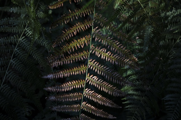 Closeup shot of a fern leaves
