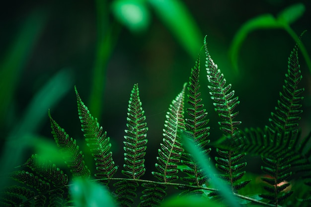 Closeup shot of ferns, the spots on the fern are the spores