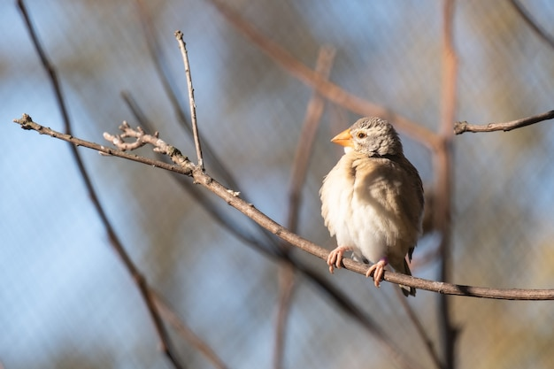 Closeup shot of finches bird perched on a tree branch