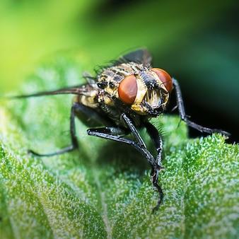 Primo piano di una mosca su una foglia verde con sfondo sfocato