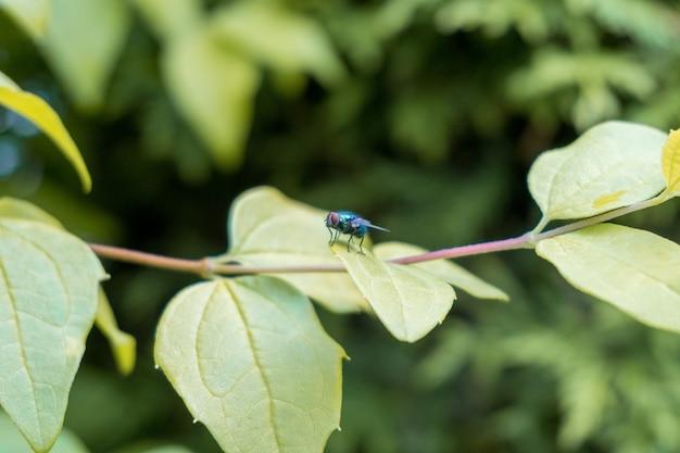 Colpo del primo piano di una mosca sulle foglie verdi ricoperte di gocce di rugiada
