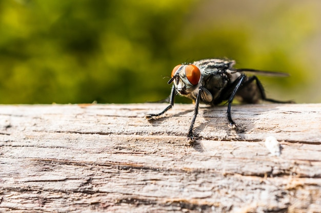 Closeup shot of a fly with orange eyes and fuzzy legs sitting on a tree branch