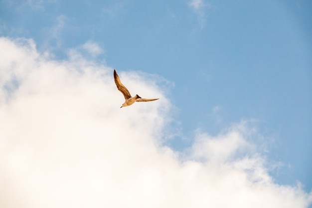 Closeup shot of a flying seagull over the wate in the sky