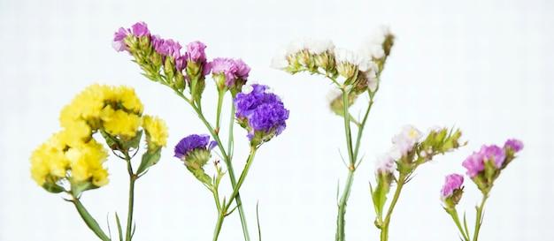 Closeup shot of fresh colorful statice
