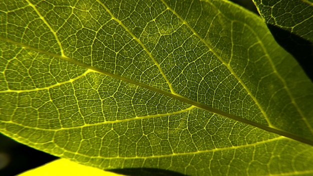 Closeup shot of a fresh green leave texture