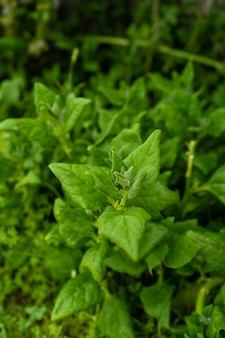 Colpo del primo piano delle piante verdi fresche nel giardino
