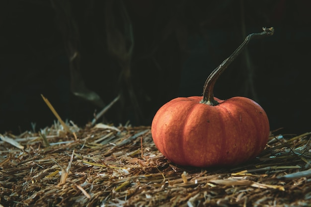 Closeup shot of a fresh pumpkin on dry grass