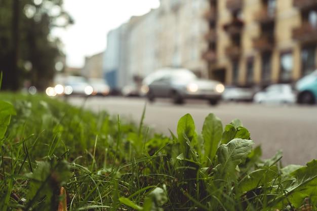 Colpo del primo piano dell'erba e delle piante sul marciapiede