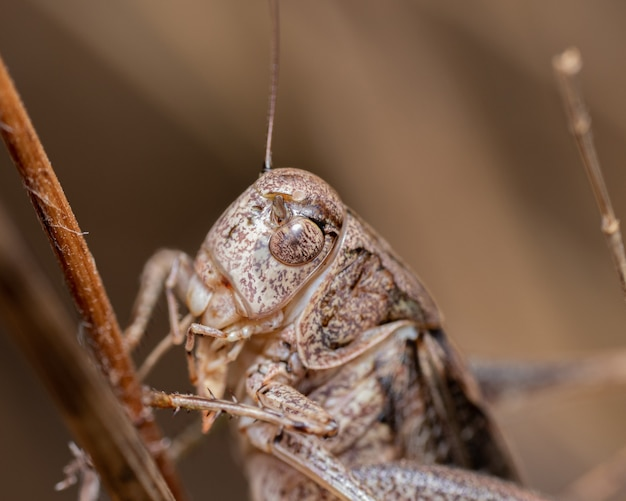 Closeup shot of a grasshopper