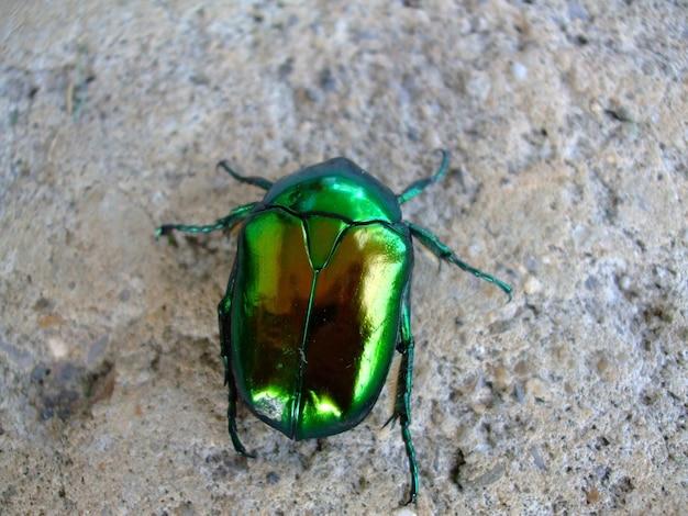 Colpo del primo piano di uno scarabeo verde sul terreno