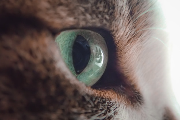 Closeup shot of a green eye of a black and white cat