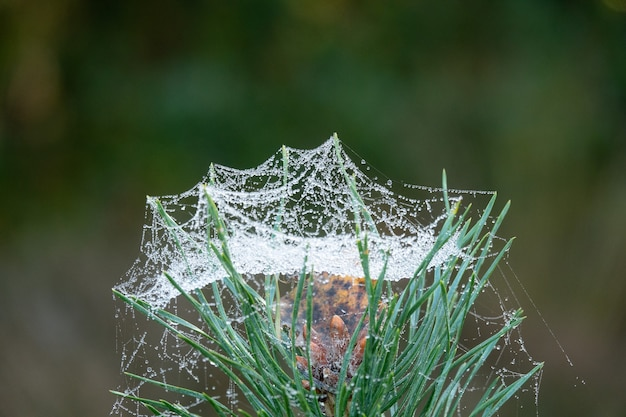 Closeup shot of green grass covered in wet spider web