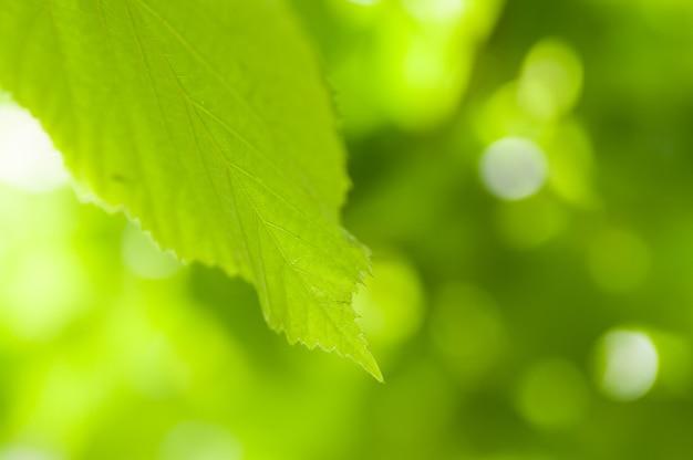Closeup shot of green leaf against a bokeh background