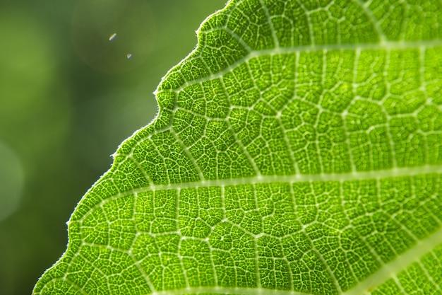 Primo piano di una foglia verde su uno sfondo sfocato